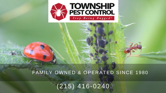 Pest control, Ant control, Bee control, Centipede control, Carpenter ant control, Millipede control, Spider control, Silverfish control, Flea control, Mice control, Rat control, Cockroach control
