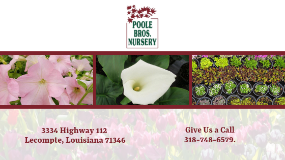 Retail Garden Center, Azaleas, Holly, Ground Covers, Ornamental Grasses, Louisiana nursery, flowers, shrubs, grasses, trees