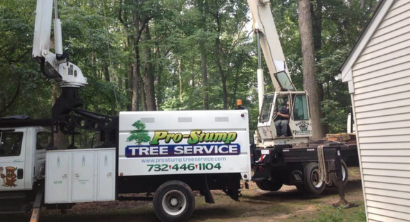 Tree Removal Tree Topping Trimming & Pruning Tree Tabling Land Clearing Root Feeding Stump Grinding