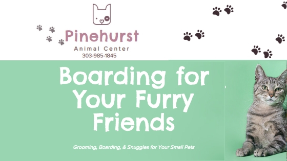 Pet Boarding Lakewood, Pet Grooming Lakewood, Pet Daycare Lakewood, Groomers Lakewood, Dog Grooming Lakewood, Cat Grooming Lakewood, Animal Grooming Lakewood