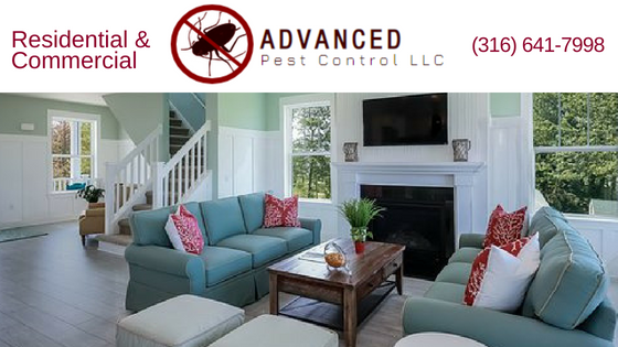 Pest Control Service, Termite, Spiders, Ant, Commercial And Residential, Bed Bugs, Exterminating