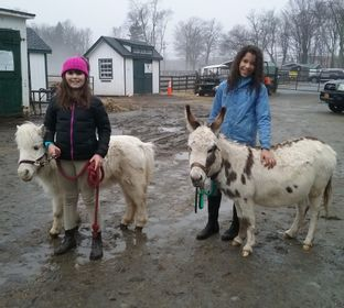 Seaton Hackney Stables, horseback riding, riding lessons, FlexCamp, trail rides, Equishare, Equestrian Summer camp, Equishare Program