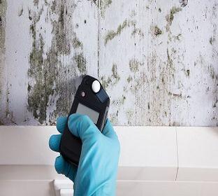 Pembroke Pines Mold Inspection - Waterproofing - 14447 Miramar Pkwy  Miramar, FL - Reviews - Phone Number - pr.business